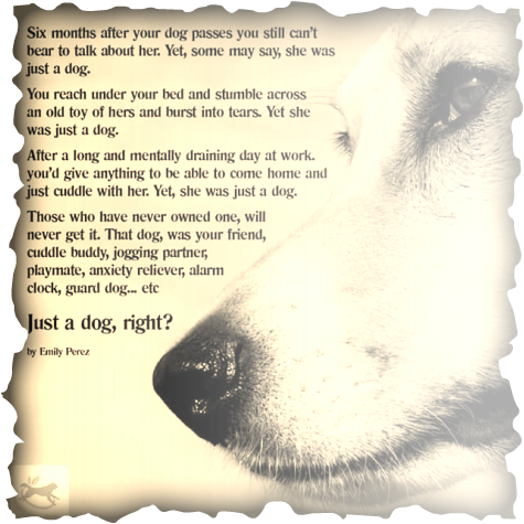 Loss Of Pet >> Pet Grief And Loss